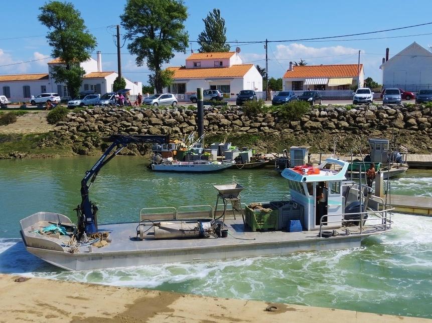 Oysters Ile d'Oleron